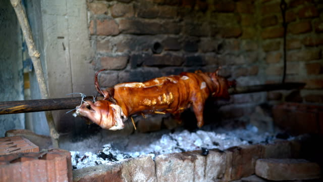 Pig roasts on a spit video