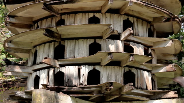 Pigeon old tower house. video
