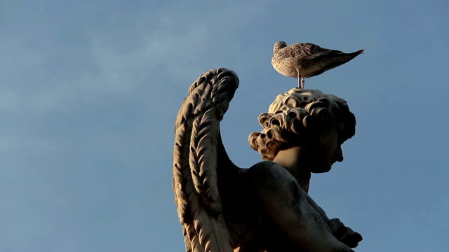 pigeon over the head of an angel statue near St. Peter's cathedral, Rome video