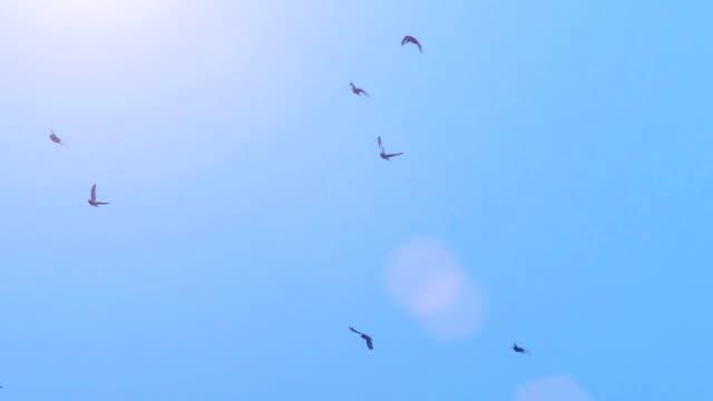 ハトとその美しいジュラルミン - 鳥点の映像素材/bロール