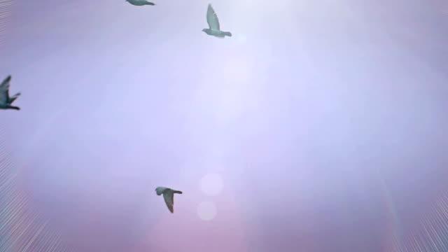 ハトとその美しいジュラルミン - ハエ点の映像素材/bロール
