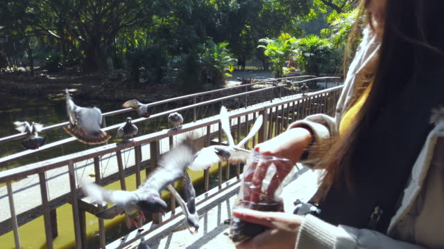 Pigeons eating from female tourist hand