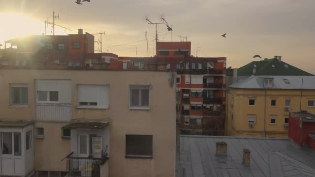 pigeons flying around drone above building - antenna parte del corpo animale video stock e b–roll