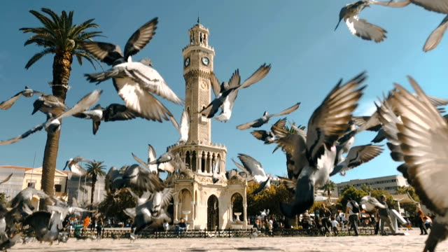 pigeons in konak square around clock tower of izmir - colombaccio video stock e b–roll