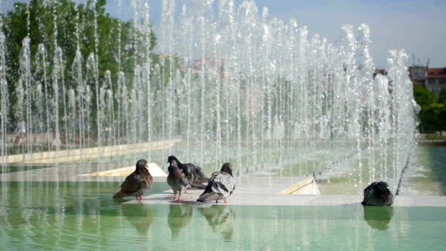 pigeons in the city - fountains stock videos & royalty-free footage