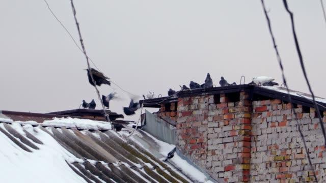 tauben auf dem großen hausdach hautnah - dachboden stock-videos und b-roll-filmmaterial