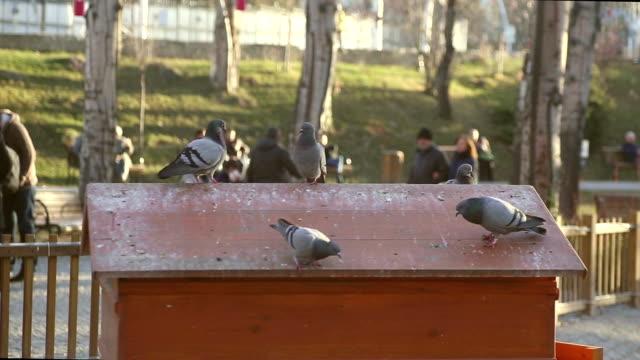 pigeons on the roof - anatolien bildbanksvideor och videomaterial från bakom kulisserna