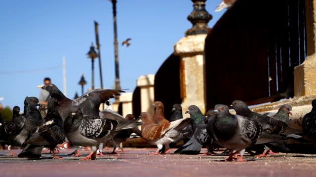 vídeos y material grabado en eventos de stock de palomas en la calle-super cámara lenta - distrito eminonu