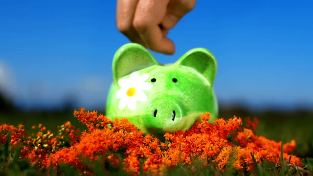 HD: Piggy Bank in the Optimistic Natural Environment