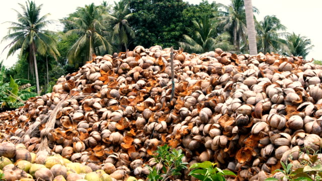 Pile of Coconut Shell video