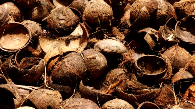 A pile of coconut shells A pile of coconut shells animal shell stock videos & royalty-free footage