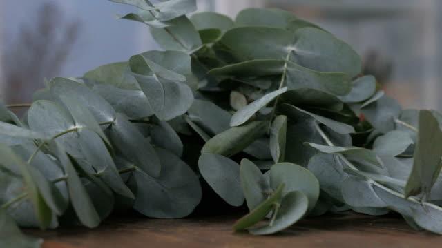 hög med färska gröna eukalyptusgrenar - eucalyptus leaves bildbanksvideor och videomaterial från bakom kulisserna