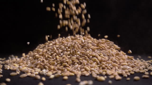 vídeos de stock e filmes b-roll de pile of wholegrain of pearl barley or wheat that falls from above on black background. agriculture closeup macro food raw seed. - lapa