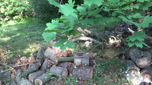 Pile of wood logs on the edge of the forest