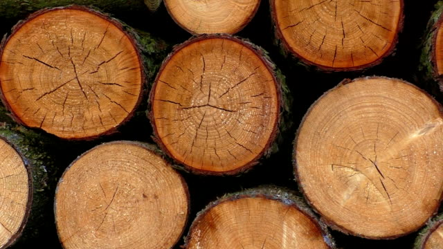 Pile of wood logs ready for winter Pile of wood logs ready for winter firewood stock videos & royalty-free footage