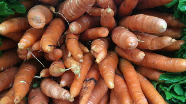 Piles of carrots video