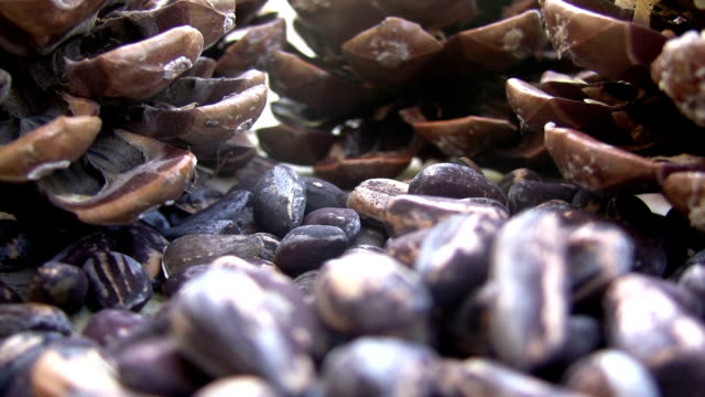 pine cone Pine Cone and Pine Kernel  HD 1080i. pine nut stock videos & royalty-free footage