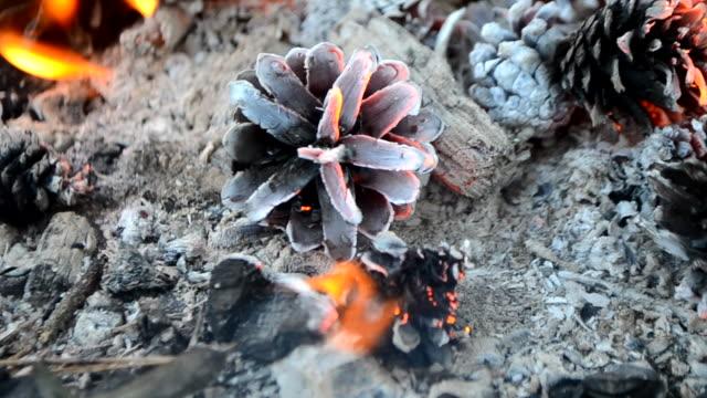 vídeos de stock e filmes b-roll de pine cones burn in the fire - inflamável