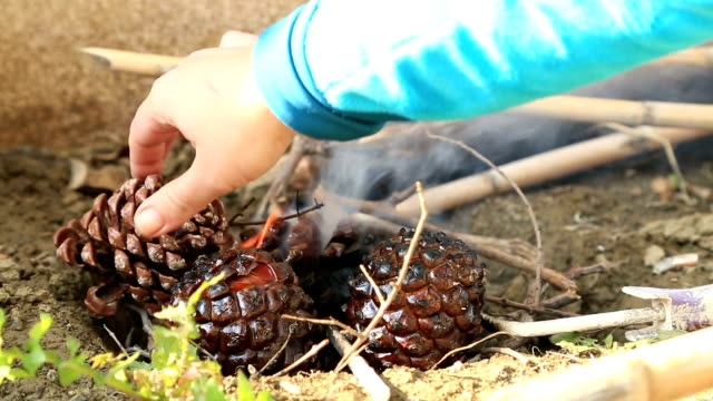 Pine Cones Burning in a Fire Pine Cones Burning in a Fire pine nut stock videos & royalty-free footage