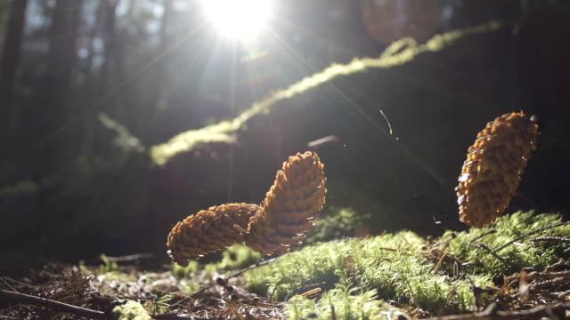 Pine Cones Falling Onto Woodland Floor video