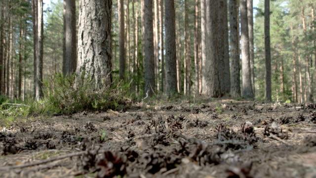 kottar som spridda på marken i skogen - fur bildbanksvideor och videomaterial från bakom kulisserna