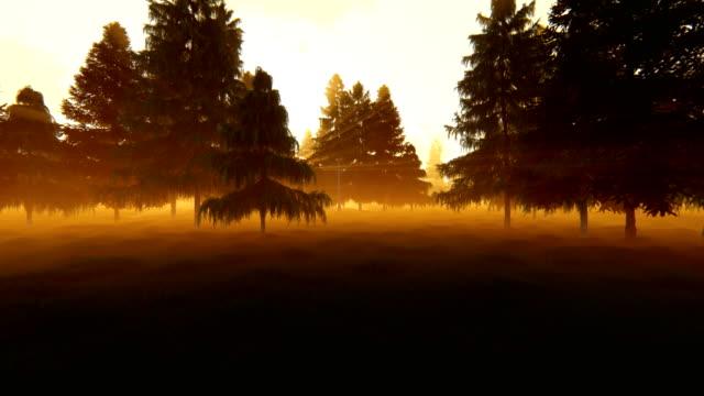 Pine forest against magical sunset, camera flight 4K