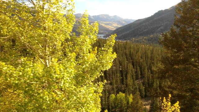 vídeos de stock, filmes e b-roll de floresta do pinho atrás de aspen amarelo alto em colorado - condado de pitkin