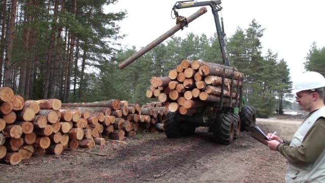 Pine timber and wood logging by forwarder in the forest under logistic manager control Pine timber and wood logging by forwarder in the forest under logistic manager control timber stock videos & royalty-free footage
