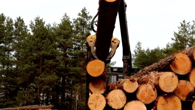 Pine timber logging by forwarder  in the forest video