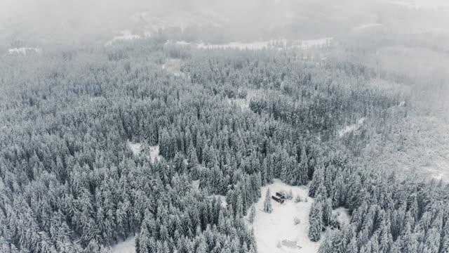 pine tree forest sett ovanifrån under vintern och dimma rullande ovan - drone helsinki bildbanksvideor och videomaterial från bakom kulisserna