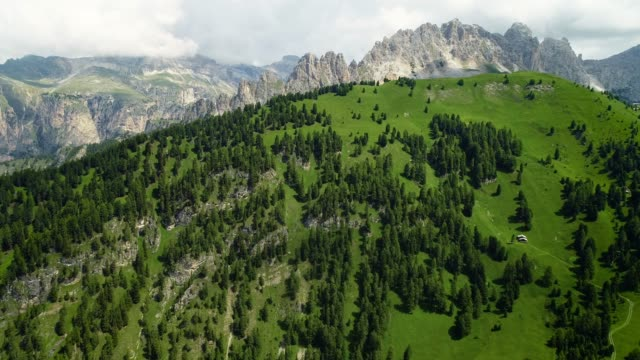 Pine tree valley in Italy with rocky mountains in the background. Beautiful landscape in a natural park - aerial view with a drone 4K