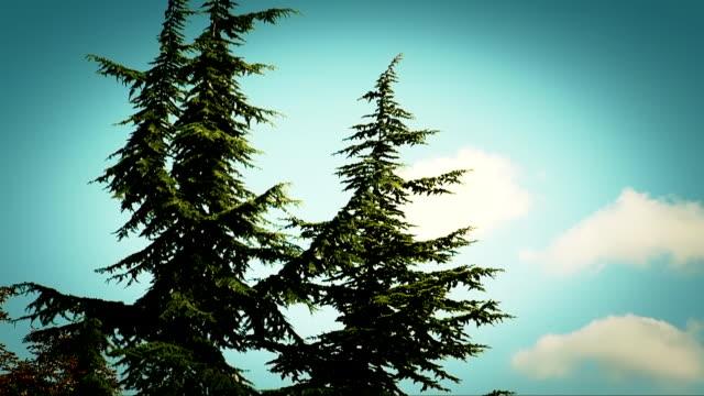 vídeos de stock e filmes b-roll de pinheiro - oscilar