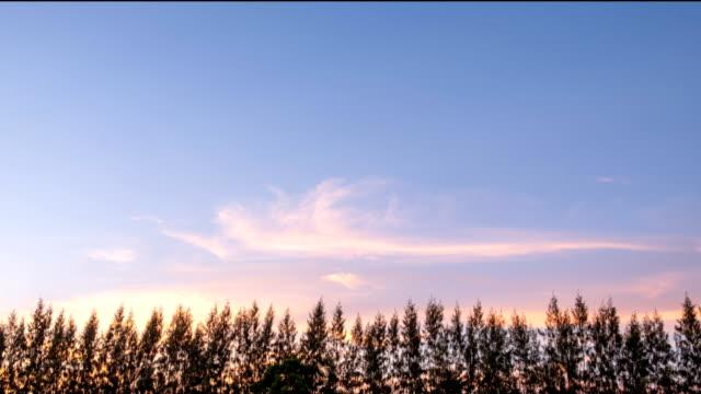 pine treetop med klar himmel och rörliga kunde - norrbotten bildbanksvideor och videomaterial från bakom kulisserna