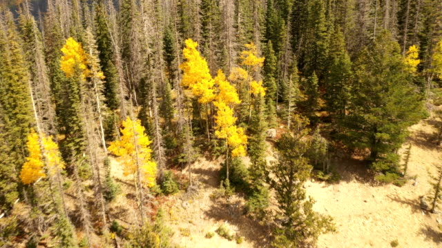 vídeos de stock, filmes e b-roll de pinheiros e aspens em colorado por drone - condado de pitkin