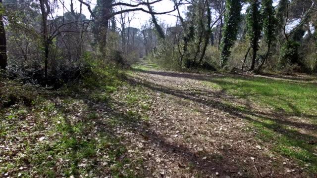 pineta bosco - fur bildbanksvideor och videomaterial från bakom kulisserna