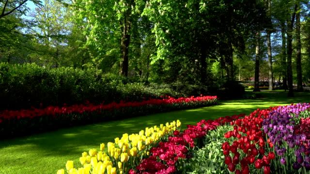 ピンクと赤のチューリップ - キューケンホフ公園点の映像素材/bロール