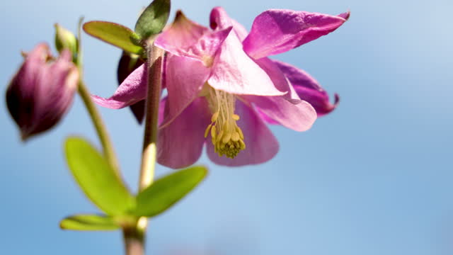 Pink bell flowers on sunny blue sky video