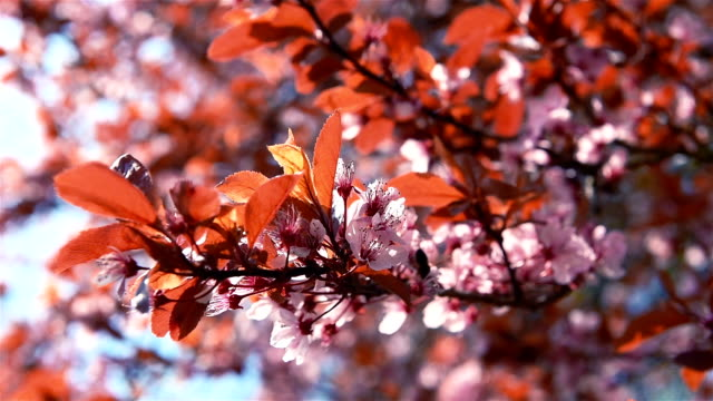 pink blossoming branches fastly swings on the wind - stame video stock e b–roll