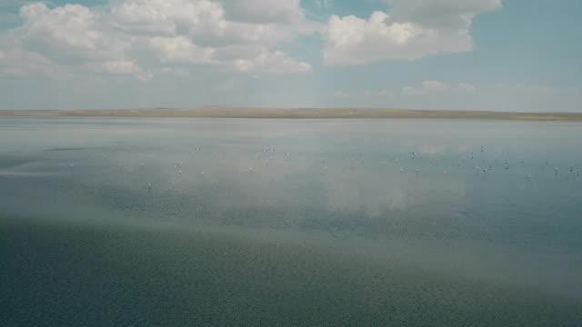 vidéos et rushes de flamant rose en survolant le lac sur la kulu - lac salé