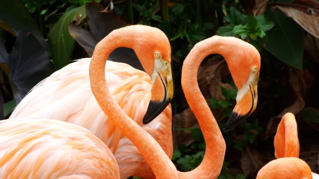 Rosa Flamingo besättning video