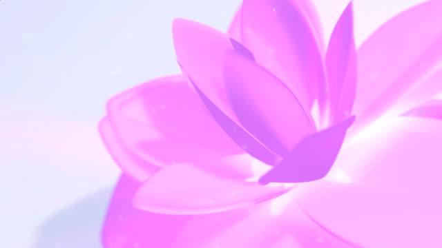 vídeos de stock, filmes e b-roll de fundo de flores cor-de-rosa - lotus