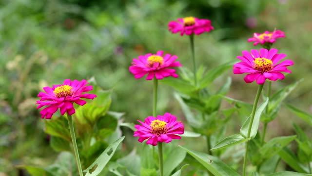 Pink flower fields