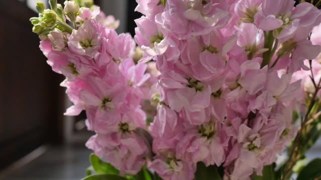 Pink flowers plants in green vintage vase.