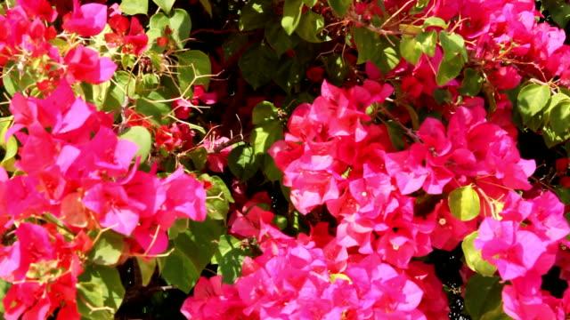 Pink flowers video