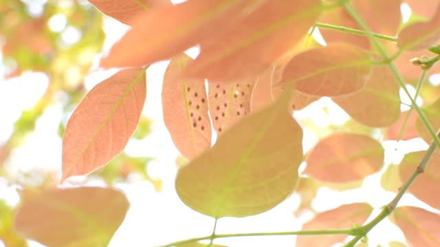 pink leaves video
