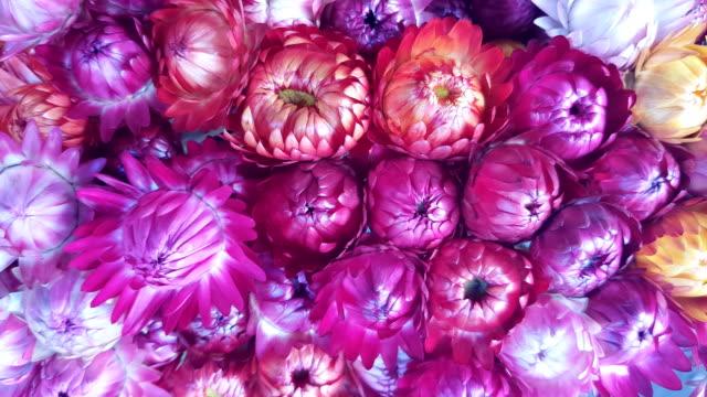 乾燥したハーブや花とピンクの自然な代替漢方薬 ビデオ