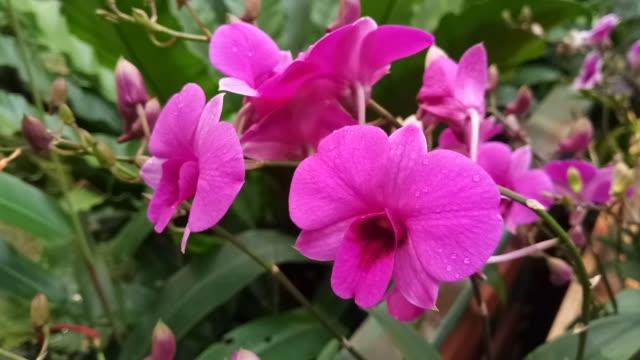 rosa orchideen im garten - hortensie stock-videos und b-roll-filmmaterial