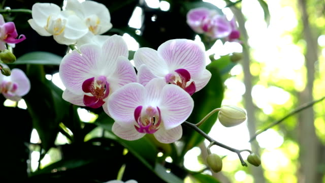 rosa orchideen-blume im garten - orchidee stock-videos und b-roll-filmmaterial