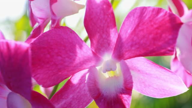rosa orchideen-blume - orchidee stock-videos und b-roll-filmmaterial