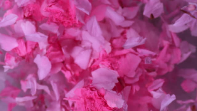 Pink powder and rose petals explode impressively